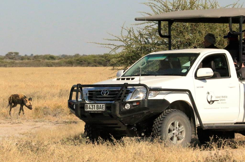 Watching a wild dog on a game drive
