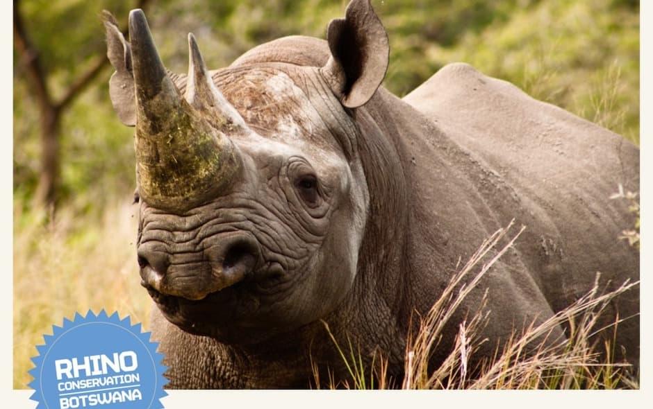Tsholofelo the rhino
