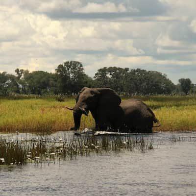 Elephant in the waters of the Okavango Delta